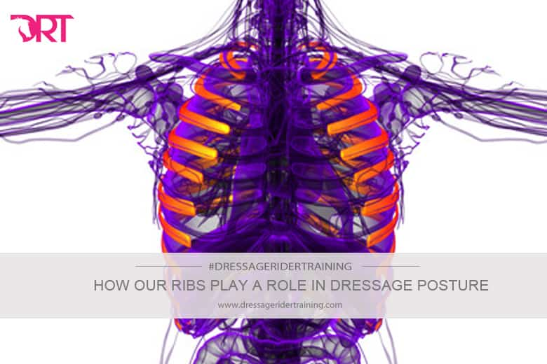 how our ribs play a role in dresage posture