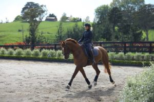 How To Keep Your Hips Healthy And Mobile As A Dressage Rider