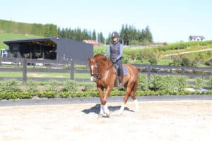 Improving Reaction Time In Dressage Riders