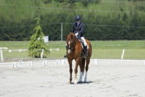 How Visualization Can Help Your Dressage