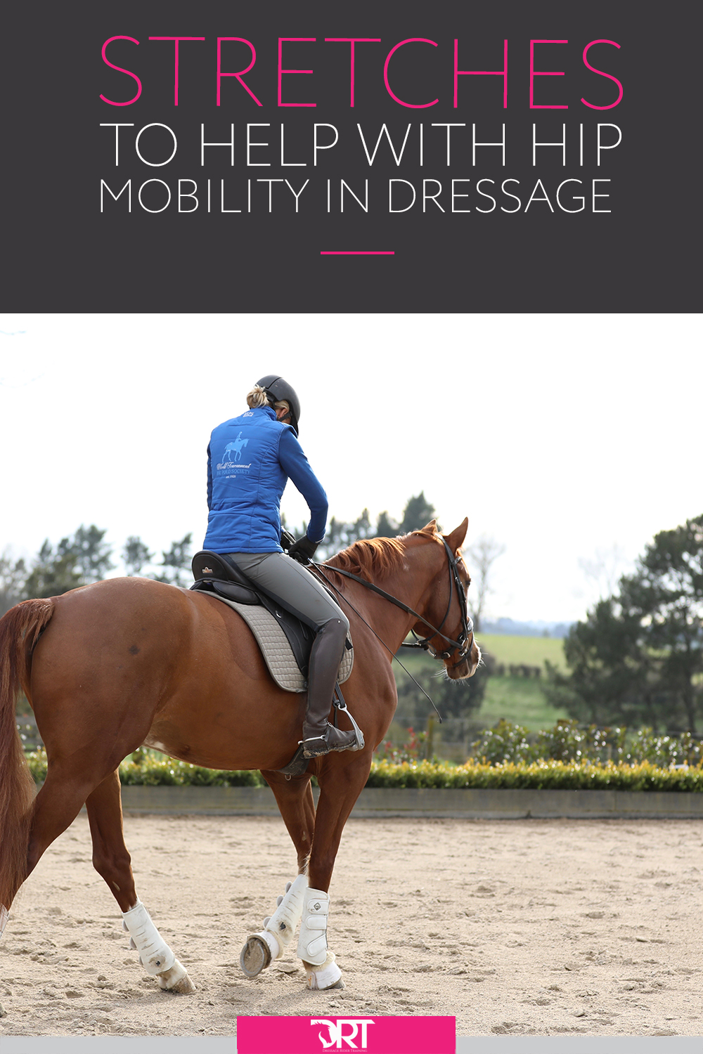 Here are some great ideas on how you can keep your hips healthy and mobile for dressage, including video demonstrating stretches you can do now. #dressagerider #dressagetraining #dressage