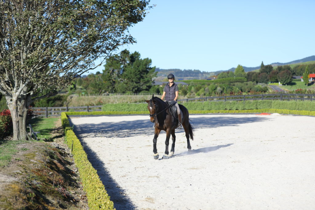 How To Build Core Strength For Dressage Riders With Free