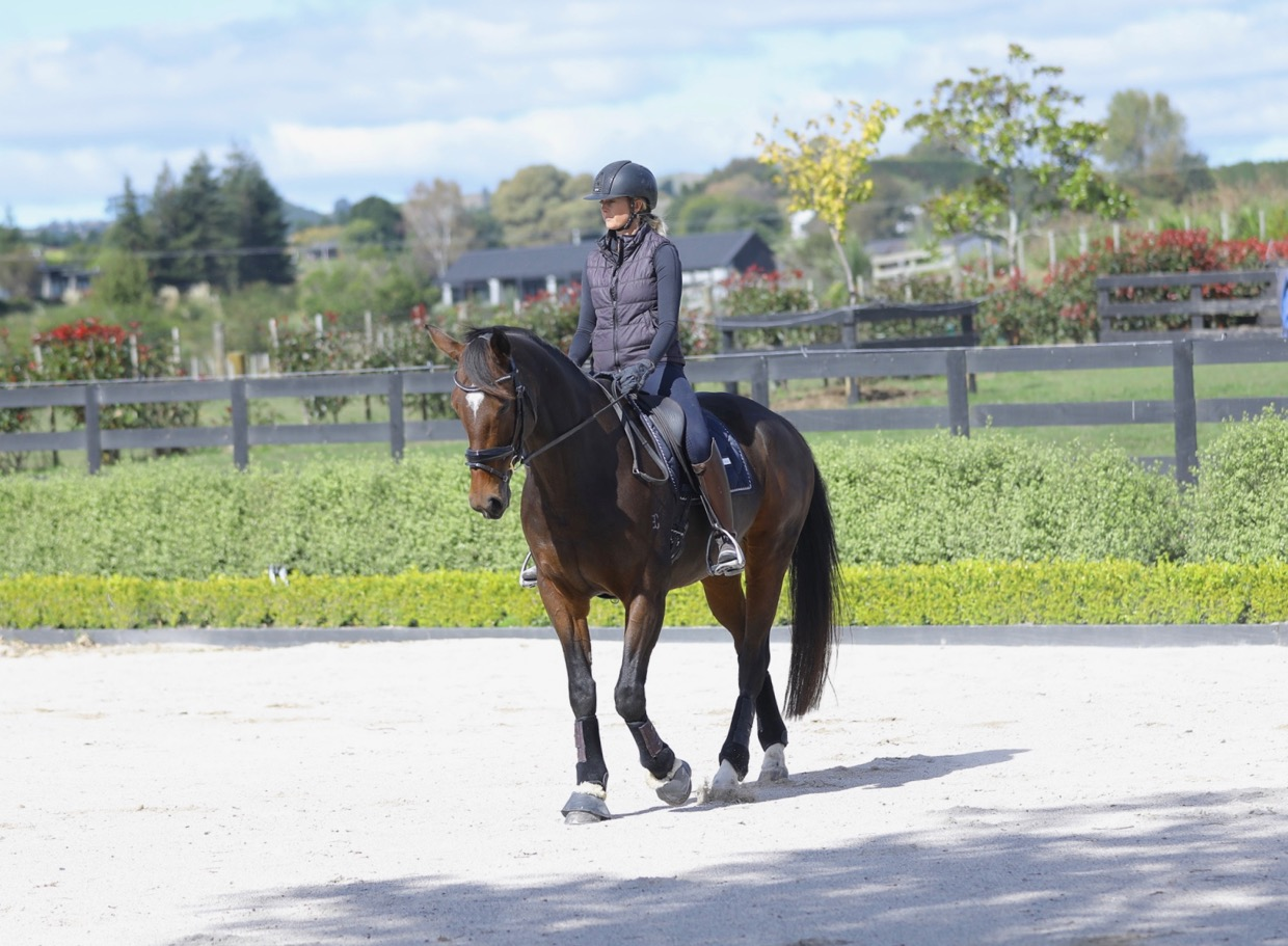 What Is The Dressage Pyramid of Training