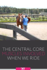 what muscles does horseback riding use