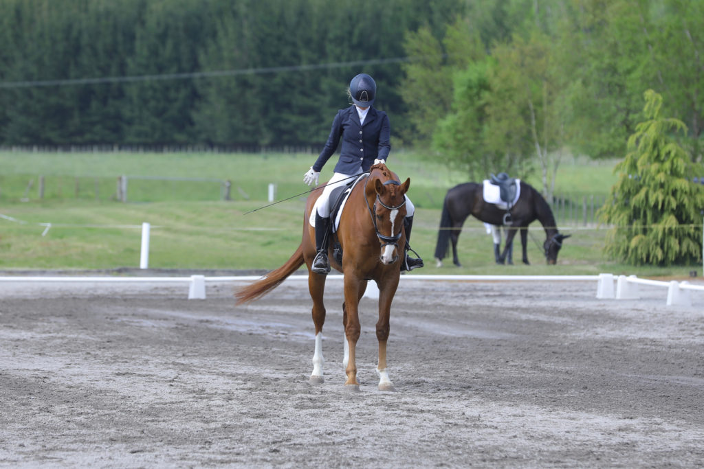Dressage Arena with a dressage rider