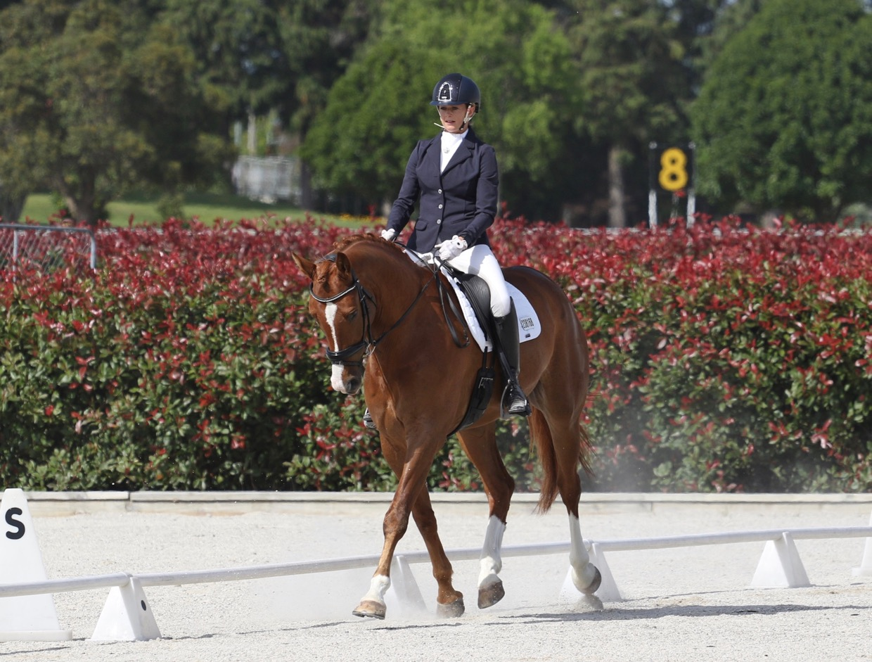 learn-the-basics-of-dressage