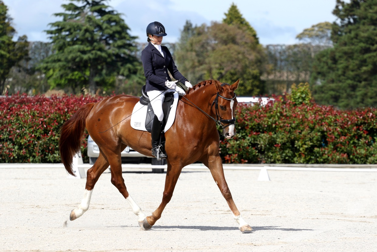 discover-the-basics-of-dressage