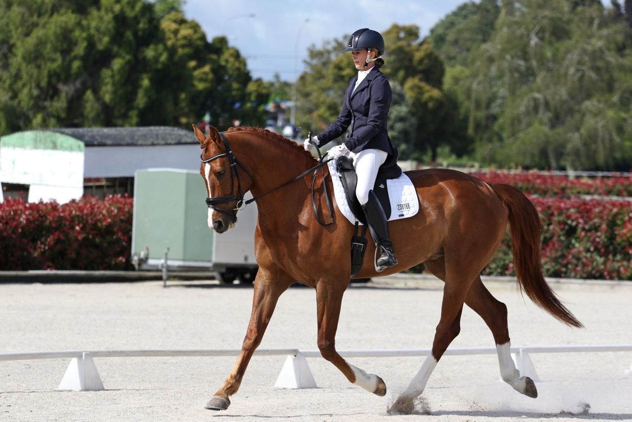 what-is-dressage